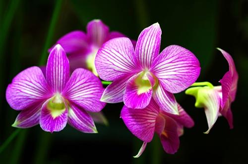 A flor da vida