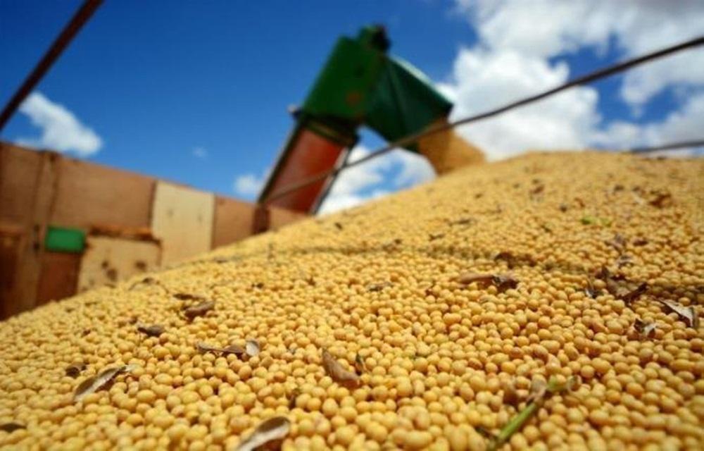 FAO anuncia previsão recorde de cereais no mundo.