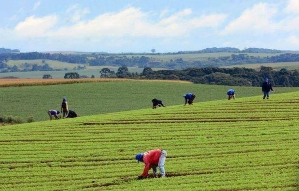Emendas tentam repor recursos cortados na agricultura.