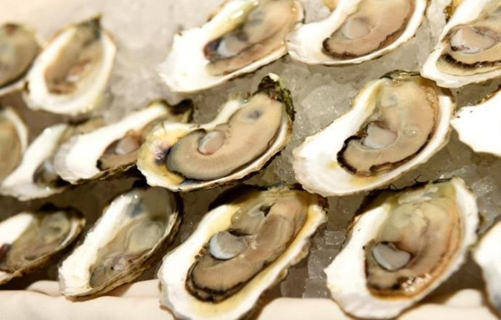 Ir para  <p>A Secretaria da Pesca de Santa Catarina proibiu nessa quinta-feira, o cultivo e a comercializa&ccedil;&atilde;o de ostras, vieiras, mexilh&otilde;es e berbig&otilde;es. O an&uacute;ncio foi feito ap&oacute;s...
