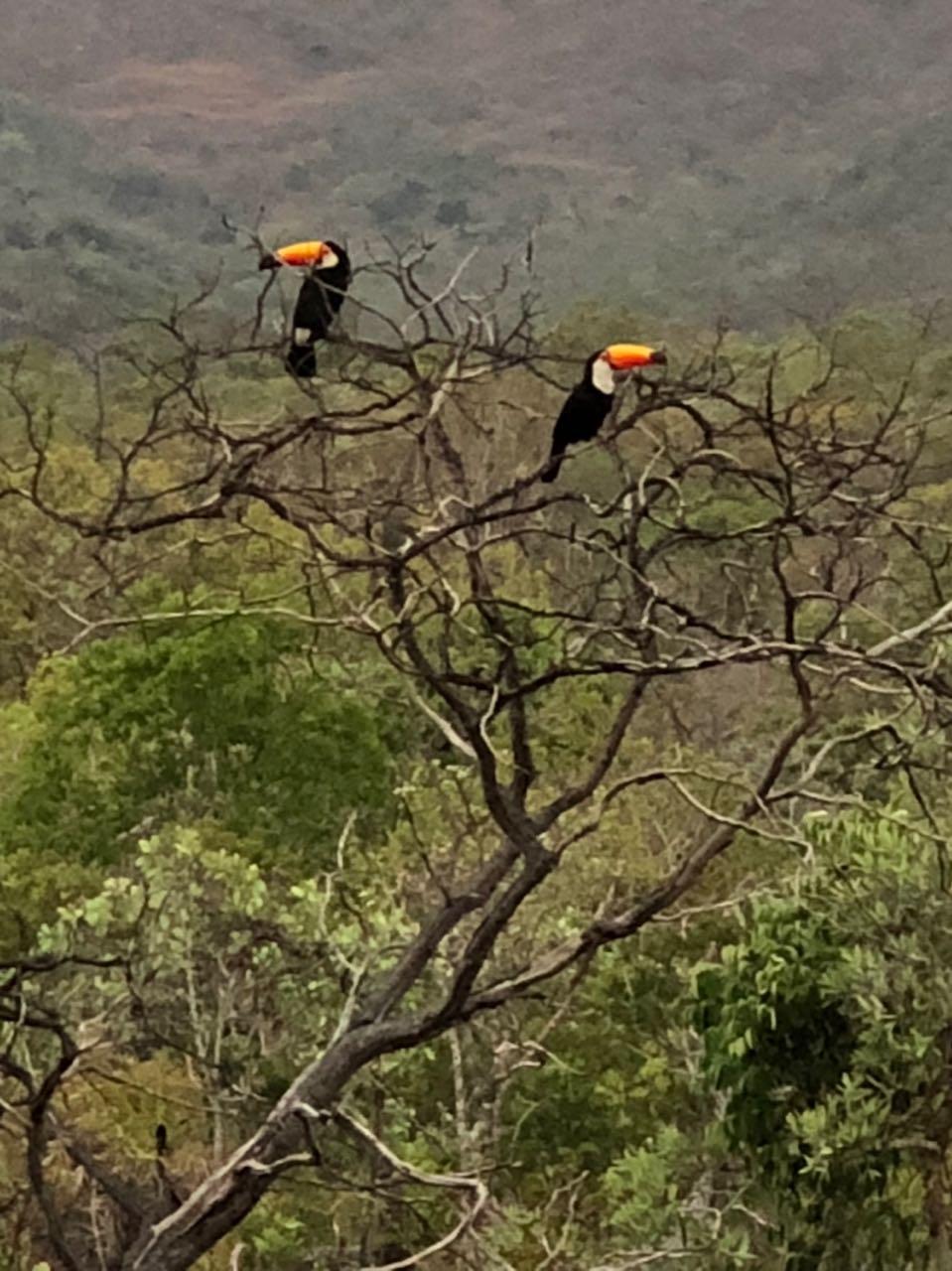 Ir para  <p><big>Duas semanas ap&oacute;s a reabertura do Parque Nacional da Chapada dos Veadeiros (GO), a natureza come&ccedil;a a dar sinais de recupera&ccedil;&atilde;o. O local que foi alvo de um dos maiores...