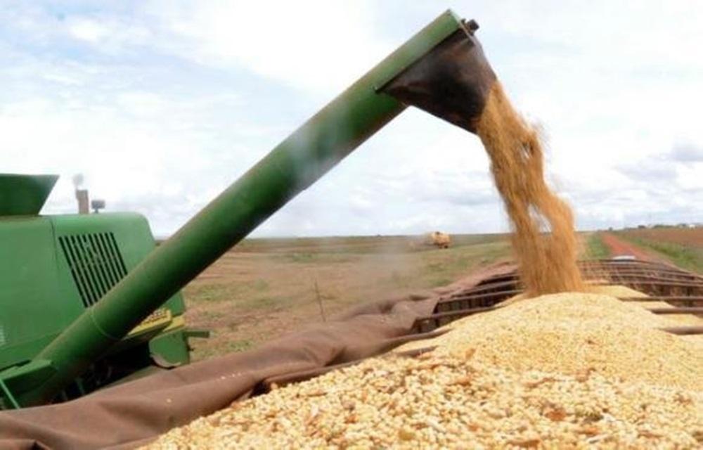 Ir para  <p>A primeira estimativa para a safra nacional de 2018, feita em janeiro, é de queda de 6% em relação ao ano anterior. A produção decereais, leguminosas e oleaginosas deve...