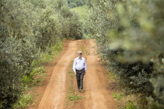 Ir para  <p><big>Id&aacute;lio Cruz In&aacute;cio come&ccedil;a a extrair azeite extravirgem de 30 mil p&eacute;s de oliveiras cultivadas no Paran&aacute; para &lsquo;matar as saudades&rsquo; da terrinha;...