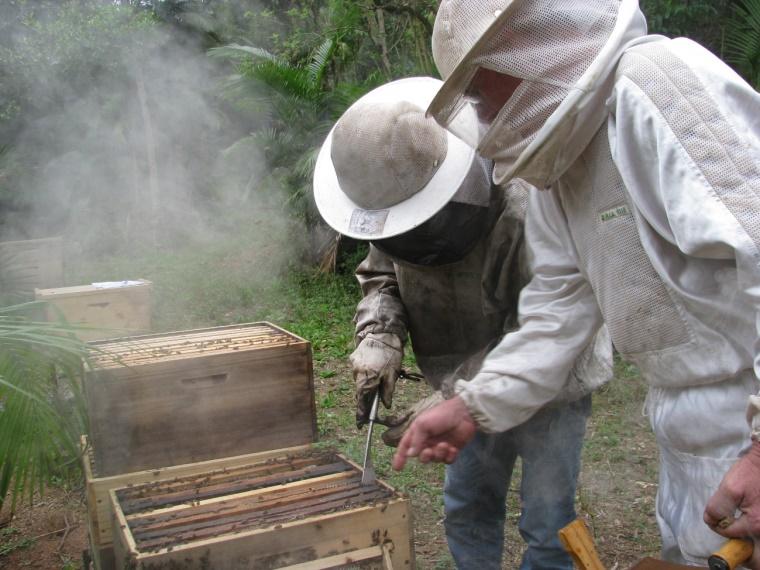 Ir para  <p><big>O Estado de Santa Catarina &eacute; o terceiro maior produtor nacional de mel, com aproximadamente 10.000 apicultores envolvidos na atividade. Entretanto, at&eacute; o ano de 2010 verificavam-se baixos...
