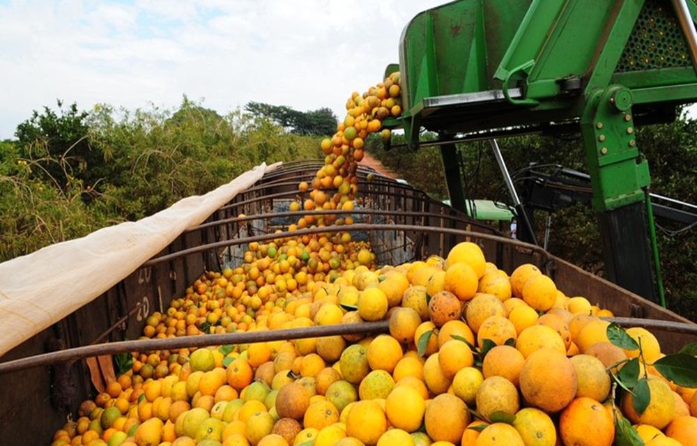 Ir para  <p>O volume exportado de suco de laranja aos Estados Unidos cresceu 69% nos dez primeiros meses da safra 2017/2018, entre julho do ano passado e abril deste ano, em comparação com igual período de 2016/2017,...