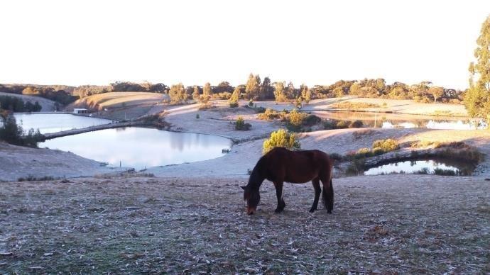 Ir para  <p>O frio intenso tomou conta de todo o Rio Grande no Sul neste domingo. Pelo menos 27 cidades gaúchas registraram temperaturas negativas, e, em 47 municípios, os termômetros marcaram entre 0ºC e...