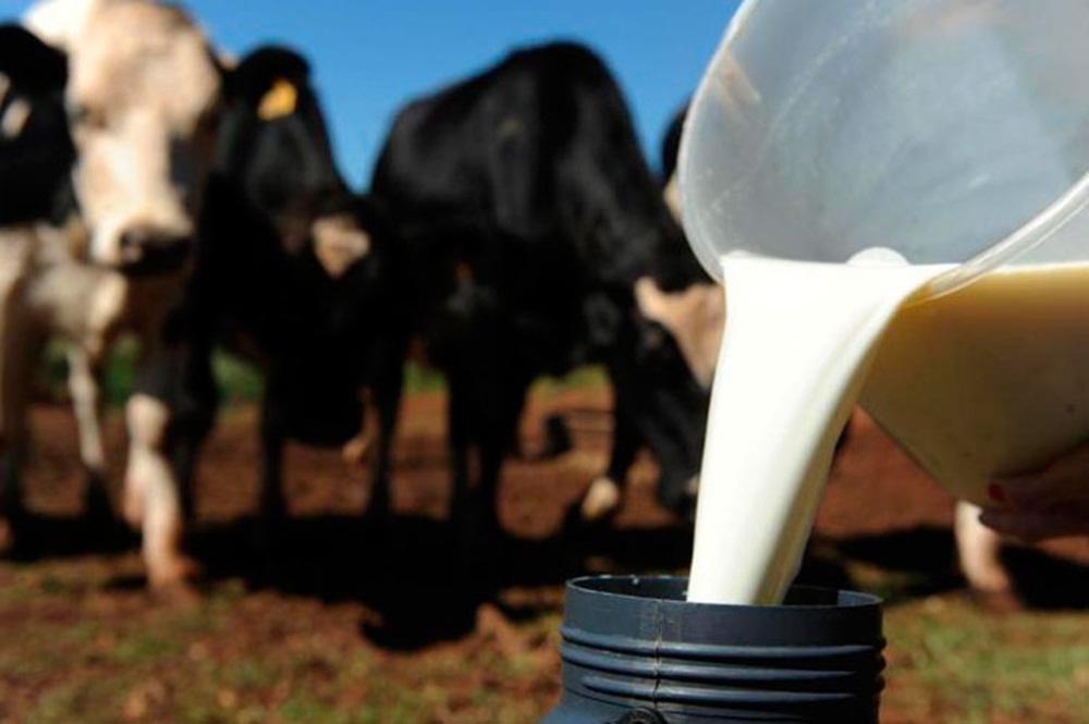 Ir para  <p>Com uma produção de leite em crescimento acelerado, Santa Catarina busca novos mercados para exportação. O secretário de Estado da Agricultura e da Pesca, Airton Spies, embarca nesta...