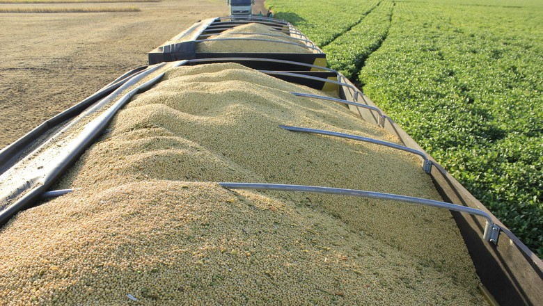 Ir para  <p>Asafra brasileira de grãos 2018/2019 pode chegar a 238,28 milhões de toneladas, estima a Companhia Nacional de Abastecimento (Conab), em relatório divulgado nesta quinta-feira (8/11), em...