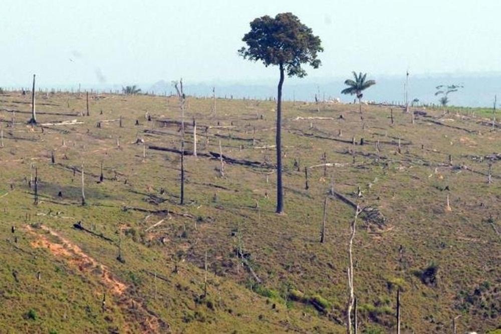 Ir para  <p><big>O desmatamento na Amaz&ocirc;nia aumentou 13,7% entre agosto de 2017 e julho deste ano. A informa&ccedil;&atilde;o foi divulgada nesta sexta-feira pelos minist&eacute;rios do Meio Ambiente (MMA) e da...
