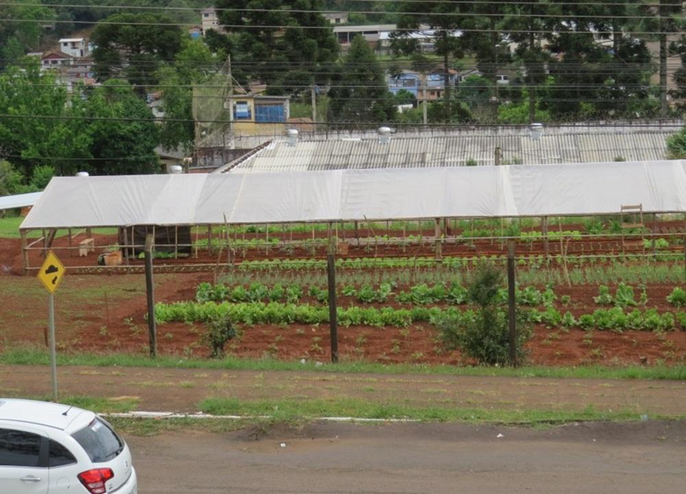 Ir para  <p><big>Uma horta de encher os olhos de quem passa próximo ao Presidio Estadual de Getúlio Vargas. A surpresa fica por conta de que ela é cultivada por detentos. A produção...