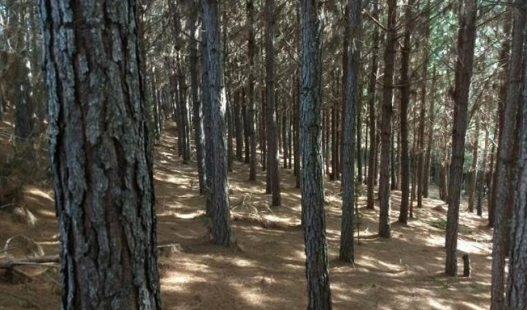 Ir para  <p>O Ministério da Agricultura (Mapa) anunciou, nesta quarta-feira (5/12), um plano para aumentar a área com florestas plantadas no Brasil em 2 milhões de hectares nos próximos dez anos. De acordo...