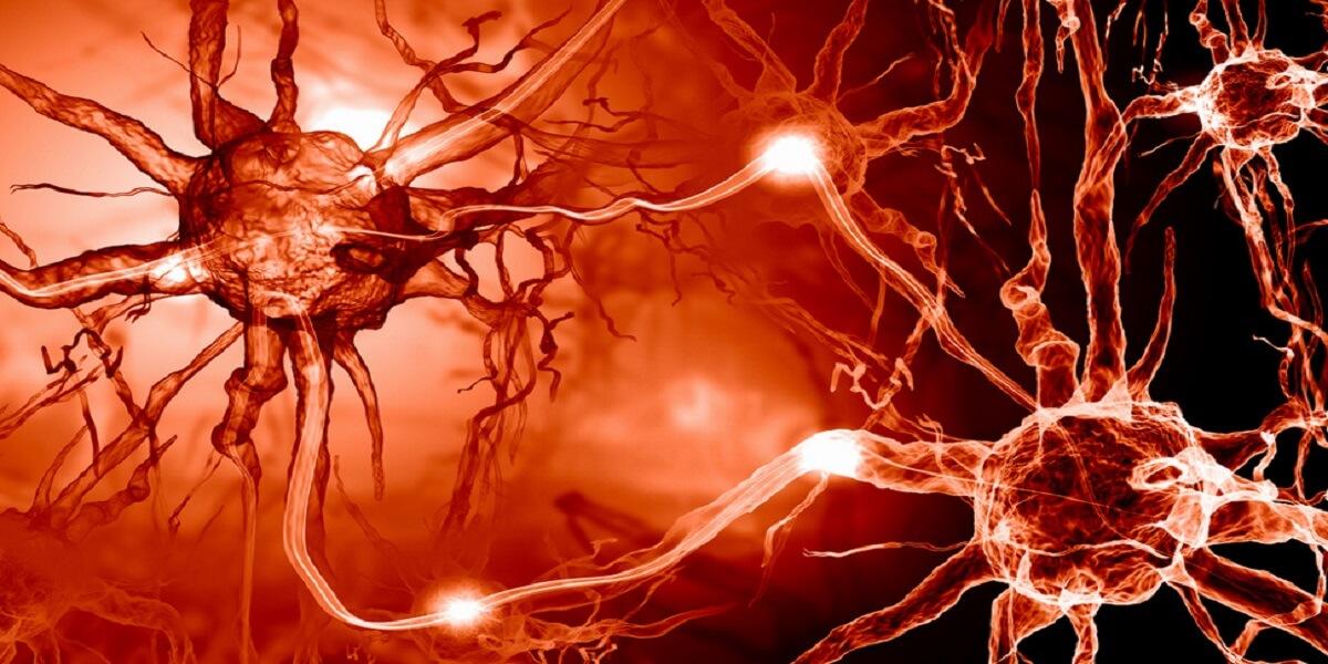 Ir para  <p><big>Se uma pessoa tem a doen&ccedil;a de Alzheimer, isso &eacute; geralmente o resultado de uma acumula&ccedil;&atilde;o de dois tipos de les&otilde;es &ndash; placas amil&oacute;ides e emaranhados...