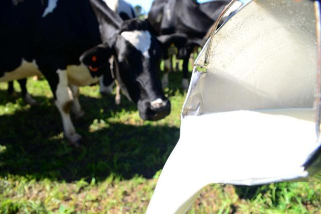 Ir para  <p><big>NOTA DA UNICAFES/RS E FETRAF/RS SOBRE A CRISE DA CADEIA PRODUTIVA DO LEITE</big></p>  <p><big>A crise de leite é programada. São dois fatores que comprovam...