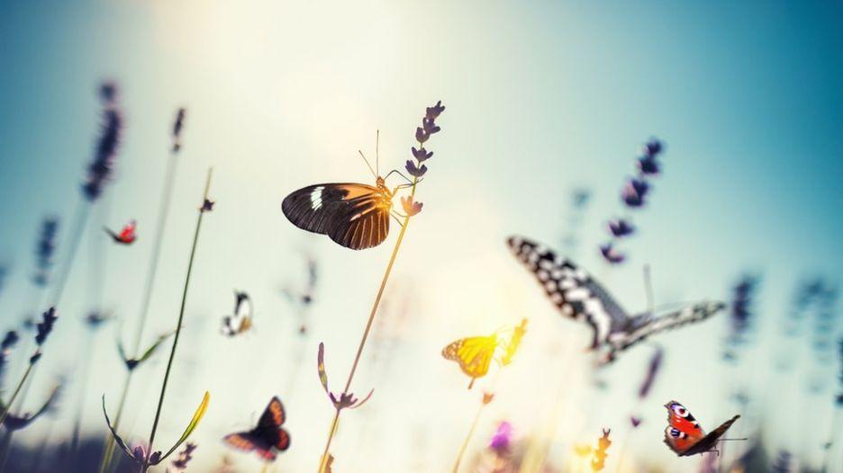 Ir para  <p><big>Uma nova an&aacute;lise cient&iacute;fica sobre o n&uacute;mero de insetos no mundo sugere que 40% das esp&eacute;cies est&atilde;o experimentando uma &quot;dram&aacute;tica taxa de...