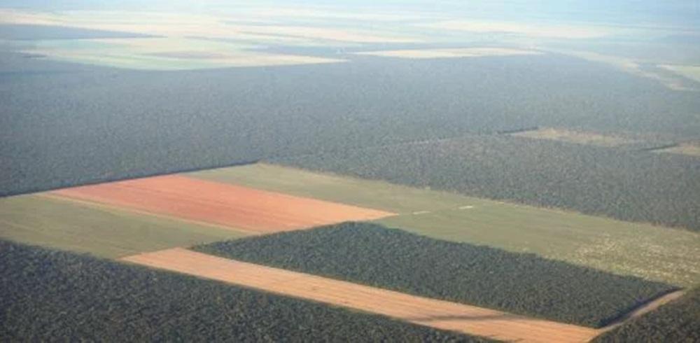 Ir para  <p><big>Em janeiro de 2019, o SAD (Sistema de Alerta de Desmatamento) detectou 108 quilômetros quadrados de desmatamento na Amazônia Legal, um aumento de 54% em relação a janeiro de 2018,...