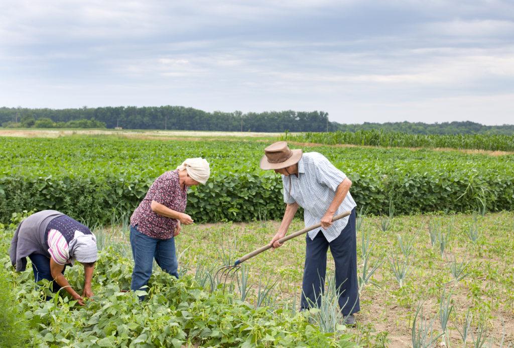 Ir para  <p>Agricultores familiares de 20 estados que cultivam produtos cujos pre&ccedil;os ca&iacute;ram ter&atilde;o desconto no pagamento do cr&eacute;dito do Programa Nacional de Fortalecimento da Agricultura Familiar (Pronaf) em...