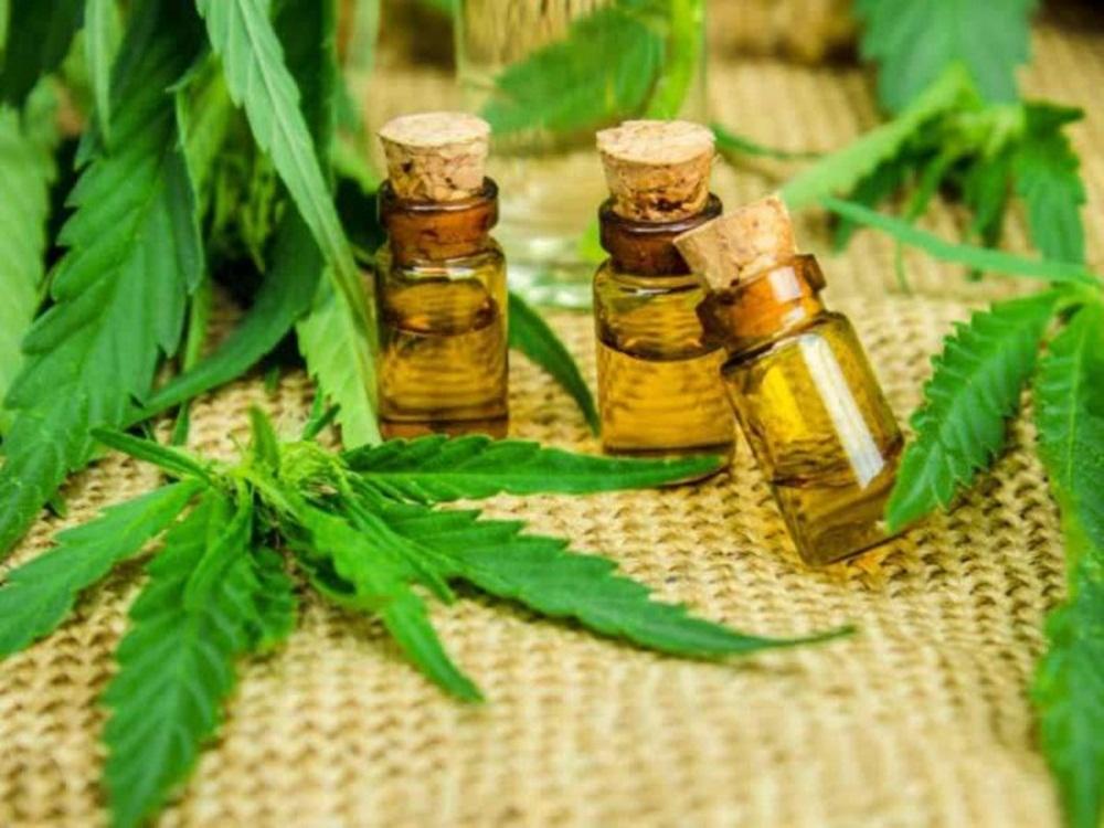 Ir para  <p><big>Após um ano e meio de luta judicial, uma família de Canoas ganhou o direito na Justiça de plantar e cultivar Cannabis Sativa, planta que dá origem à maconha, para produzir...