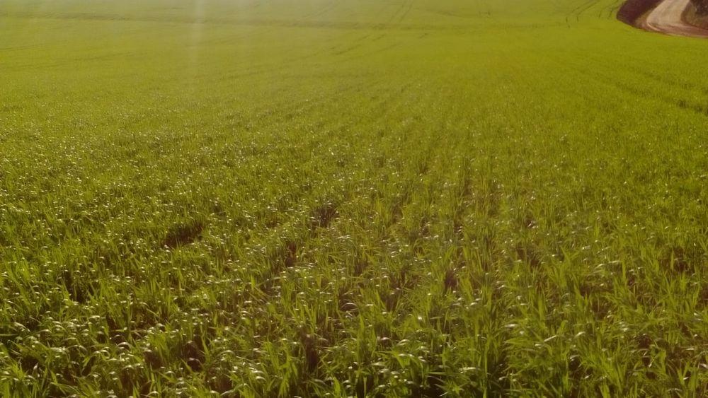 Ir para  <p>Enquanto os produtores ga&uacute;chos aceleram os preparativos para a implanta&ccedil;&atilde;o das culturas de inverno no Rio Grande do Sul, como busca por cr&eacute;dito para financiamento das lavouras, a...