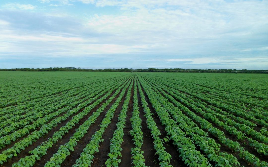Ir para  <p>Restando tr&ecirc;s semanas para o in&iacute;cio de julho, quando passa a contar o novo ano-safra, o Minist&eacute;rio da Agricultura (Mapa) adiou nesta quinta-feira a data de lan&ccedil;amento do Plano Safra 2019/2020,...