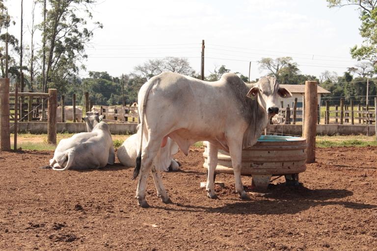 Ir para  <p><big>A utiliza&ccedil;&atilde;o de res&iacute;duos da agricultura na alimenta&ccedil;&atilde;o do gado confinado reduz a pegada h&iacute;drica da pecu&aacute;ria bovina. A conclus&atilde;o...