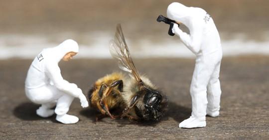 França se torna o primeiro país a proibir todos os cinco pesticidas ligados à morte de abelhas