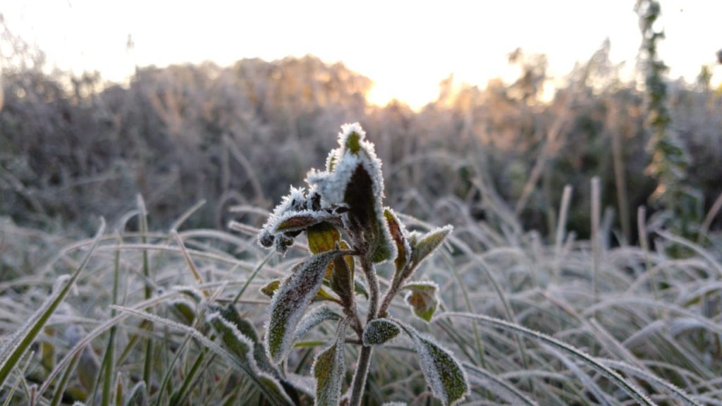 Ir para  <p>O frio no Rio Grande do Sul foi intenso no come&ccedil;o desta quarta-feira. O aviso foi dado ainda na noite dessa ter&ccedil;a, quando as m&iacute;nimas do dia foram registradas. Hoje, depois do amanhecer, ao menos...