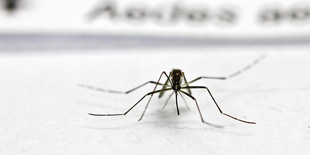 Ir para Brasil se aproxima de ter 1,5 milhões de novos casos de dengue em 2019.