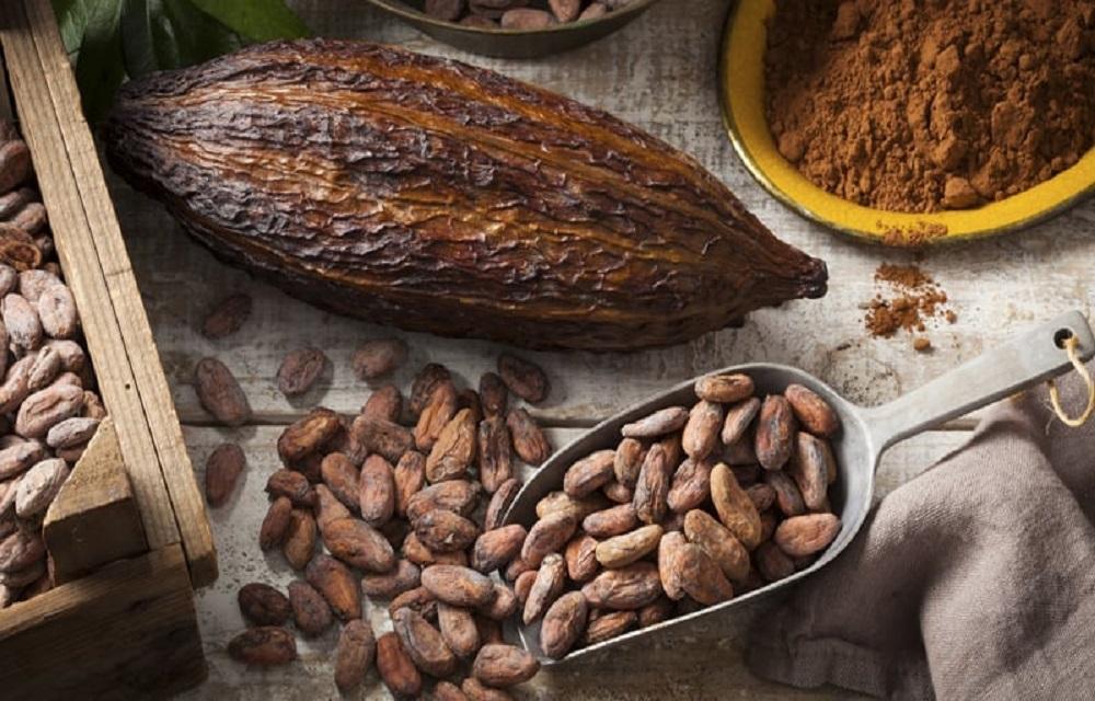 Brasil é reconhecido pela ICCO como exportador de cacau fino e de aroma.