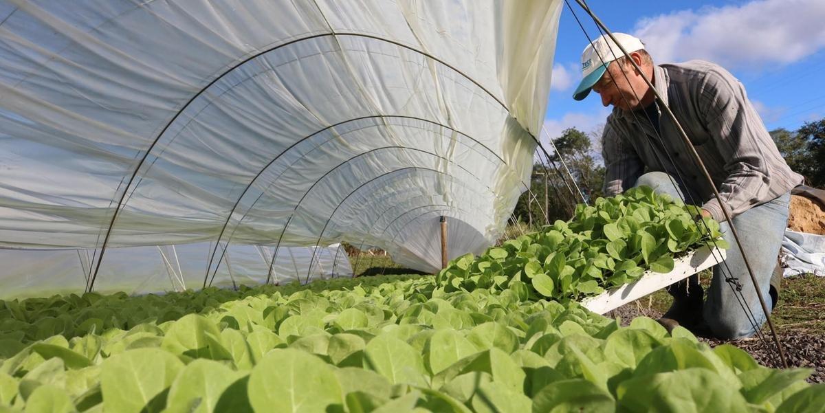 Exportações do agronegócio sobem 5,7% no terceiro trimestre.