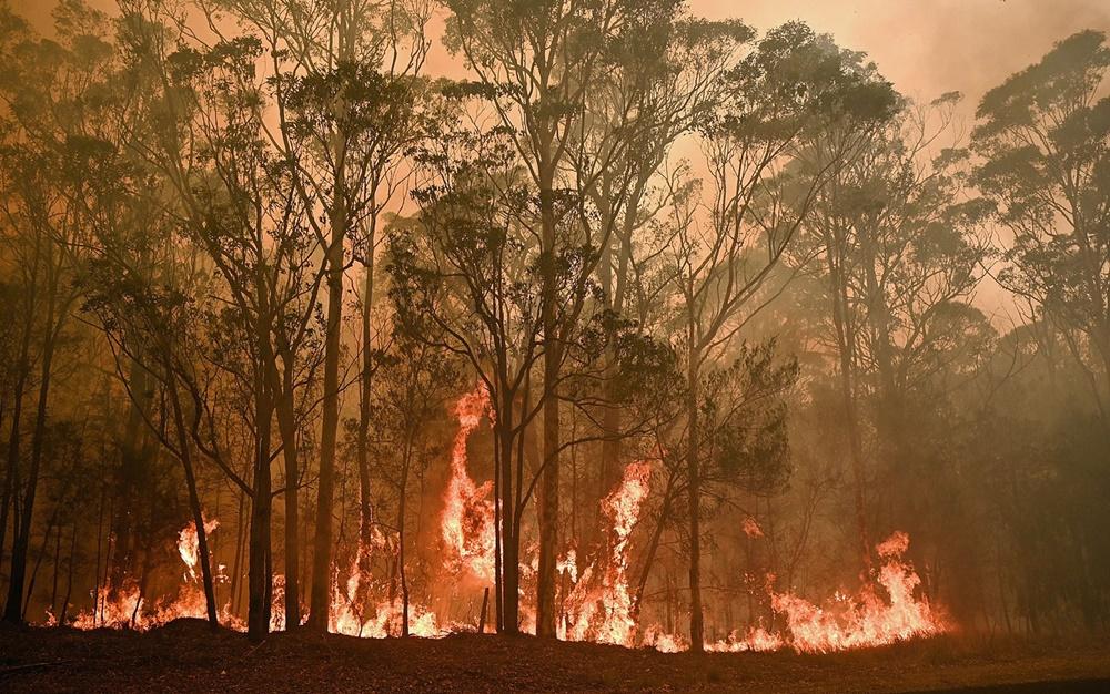 Ir para  <p><big>A Austr&aacute;lia convocou 3 mil reservistas das For&ccedil;as Armadas para combater os inc&ecirc;ndios florestais que devastam o pa&iacute;s, anunciou neste s&aacute;bado (4) o primeiro-ministro Scott...