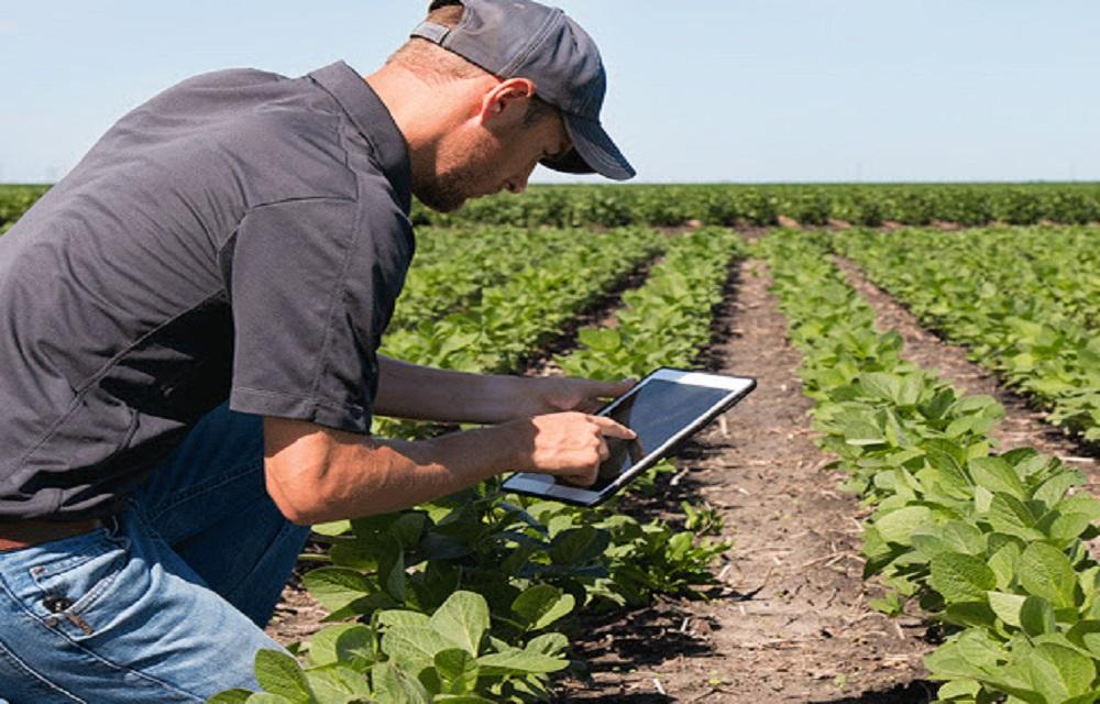 Mais de 70% das propriedades rurais ainda não têm internet no Brasil.