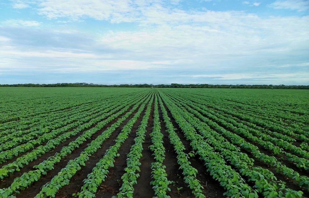 BC projeta crescimento de 2,9% no agro mesmo com pandemia de coronavírus.