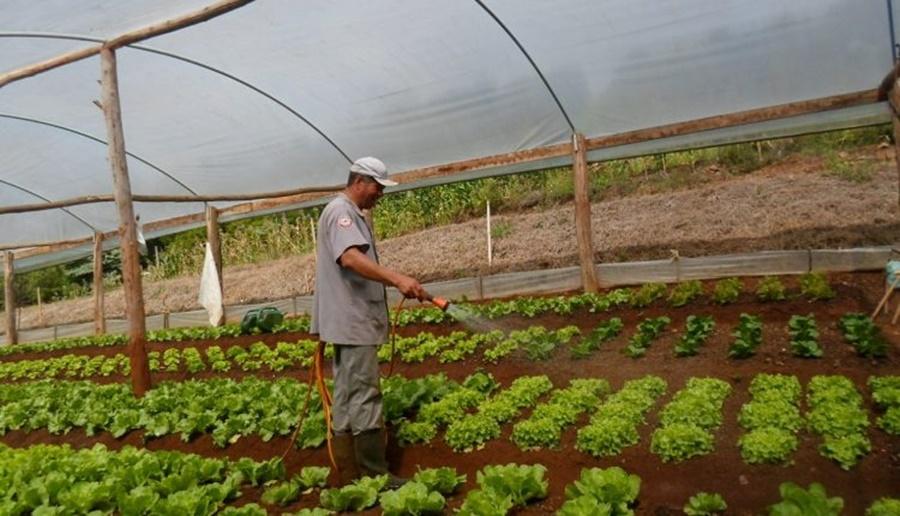Ir para Falta de chuva prejudica olericultura na região do Alto Uruguai