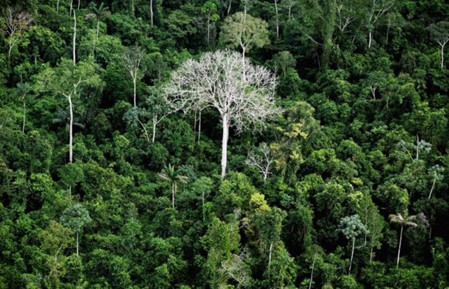 """Ir para  <p><big>De janeiro a dezembro de 2019, o Brasil perdeu cerca de 1.361.000 hectares (13.610 km&sup2;) de&nbsp;<a href=""""https://www.bbc.com/portuguese/topics/c5qvpqj1dy4t"""">floresta</a>&nbsp;tropical..."""