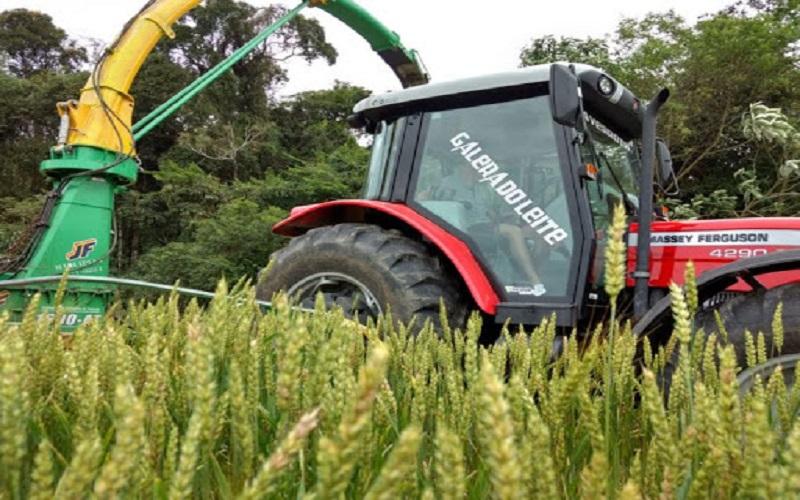 Trigo ganha espaço na produção de silagem e pré-secado.