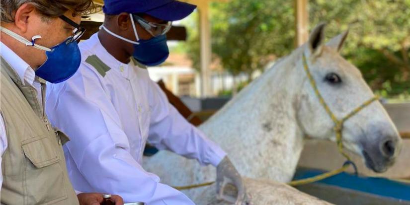 Cientistas brasileiros criam soro com anticorpos de cavalo capaz de neutralizar coronavírus.