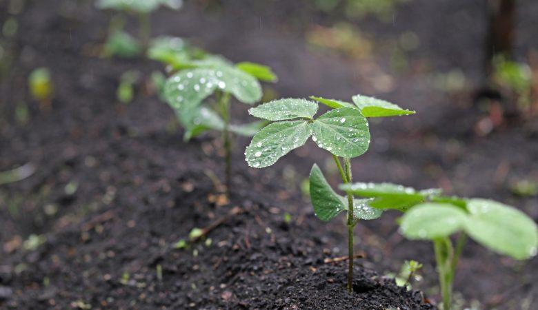 Fazer agricultura é um ato de fé.