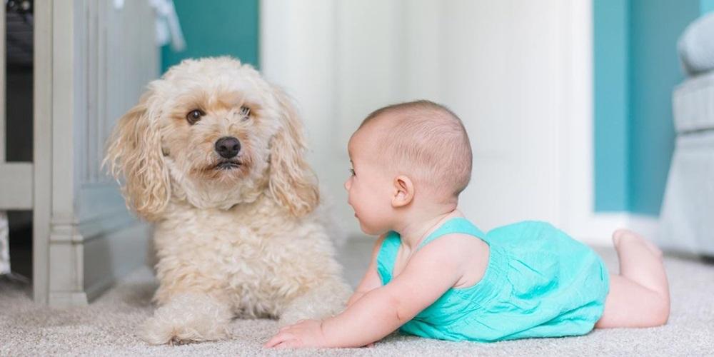 Ir para  <p><big>Um estudo feito na Austr&aacute;lia e publicado na revista Pediatric Research apontou que crian&ccedil;as que tinham contato direto com c&atilde;es apresentaram 30% menos chances de problemas de relacionamento com...