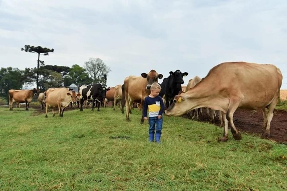 Ir para  <p><big>Um jovem casal de produtores de leite de Xanxer&ecirc;, em Santa Catarina, d&aacute; exemplo de gest&atilde;o da propriedade e consegue algo dif&iacute;cil de imaginar na atividade: tirar f&eacute;rias todo...