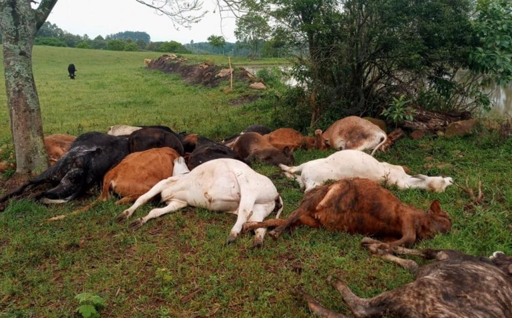Raio mata dezenove cabeças de gado no interior de Erval Grande.