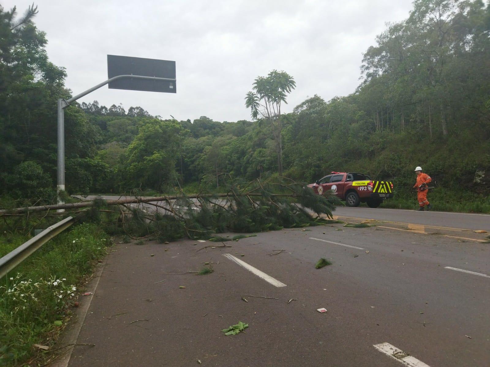 Vento chegou a 83 km/h em Concórdia provocando destelhamentos e queda de árvores